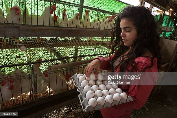 Lior Aronheim age 13 collects freshlylaid eggs at her family's egg farm on March 14 2008 in the farming community of Ramot Hashevim central Israel...