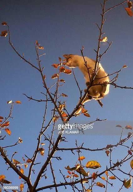 A cat lit by an early morning light freely hunts for a pray from the top of an apple tree in a garden of a home in the northern Slovak town of...