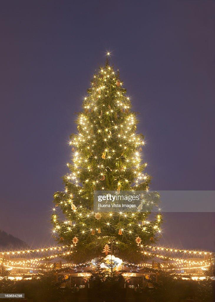 Lit christmas tree at dusk : Stock Photo