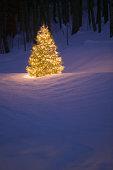 Lit Christmas tree outside