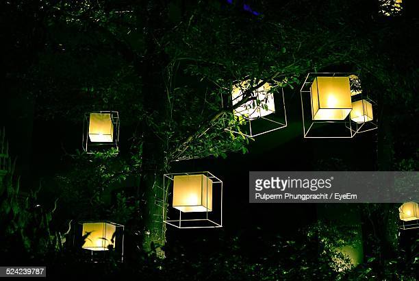 Lit Lamps Hanging From Tree At Night