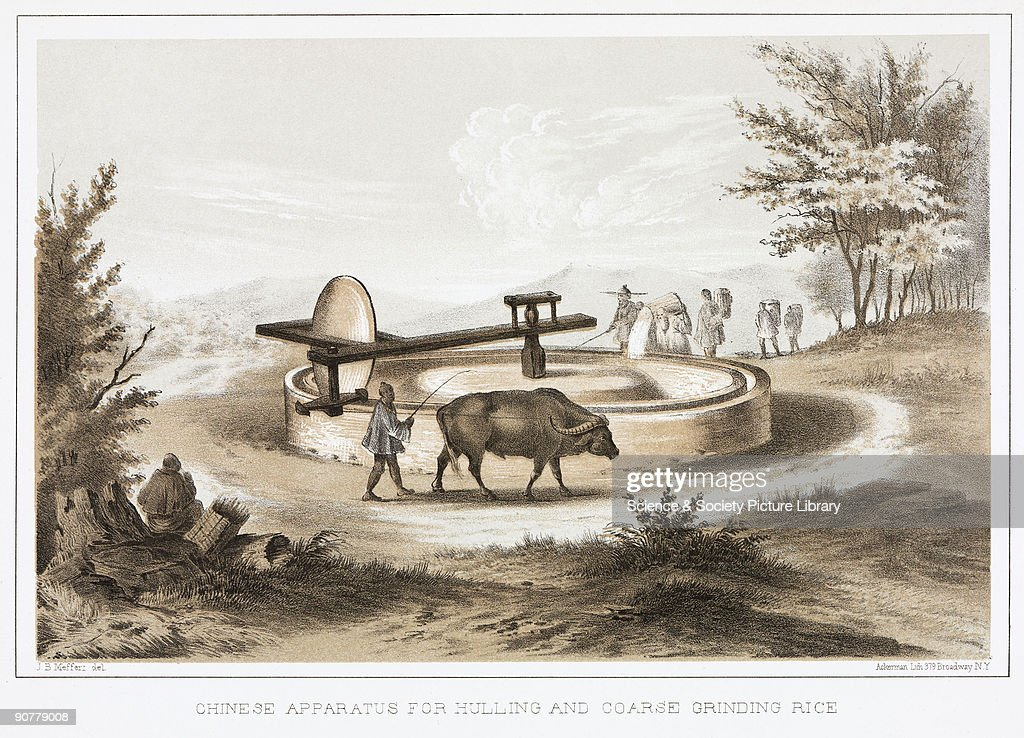 Lithographed plate by Ackerman after a drawing by J B Meffert showing a water buffalo powering a giant grinding stone Sacks of rice are poured in to...