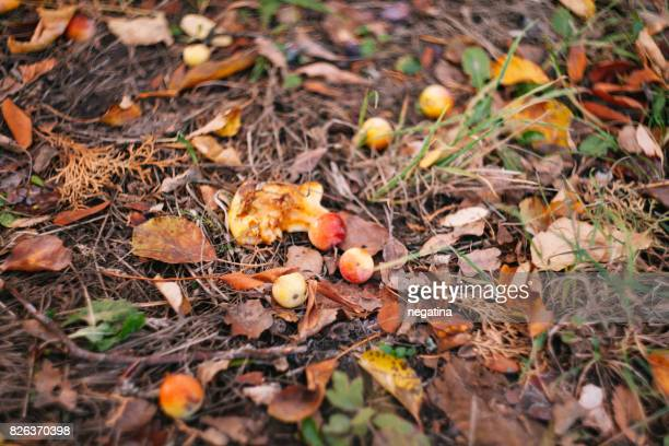 little apple fruits on the ground