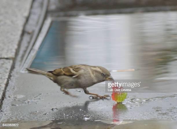 Little bird eating a jelly bean