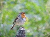 Little Bird upon a tree.