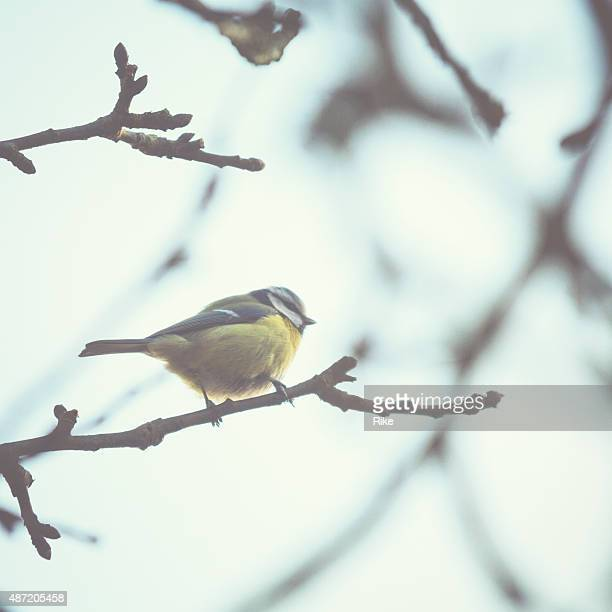 Little bird sitting on a tree in winter