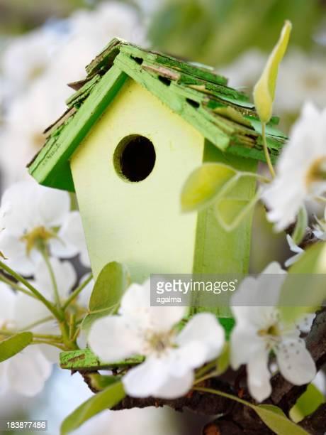春に小さな巣箱