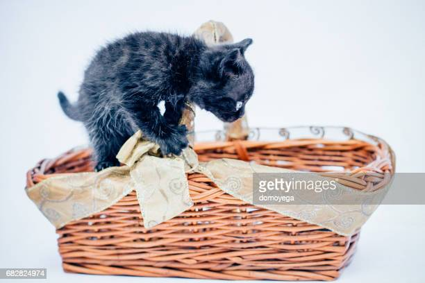 Little black cat playing in the basket