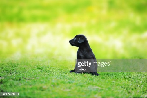 little black dog : Stock Photo