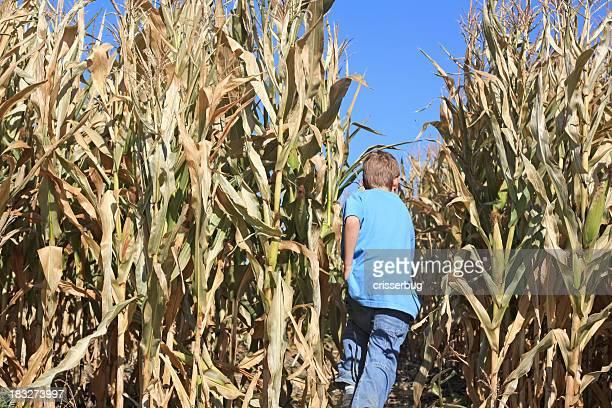 Petit garçon entrant dans un labyrinthe de maïs