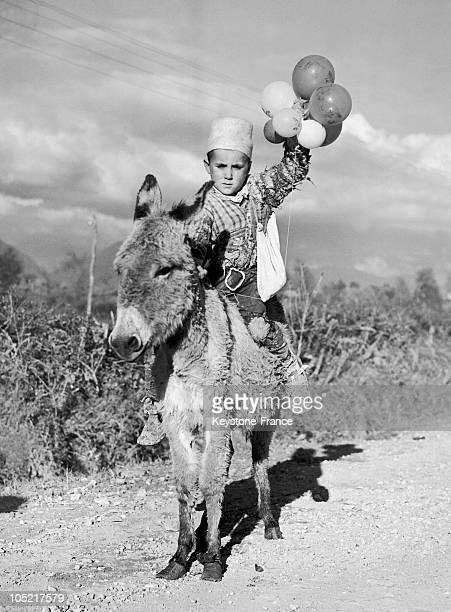 Little Boy Going To Tirana Albania On His Donkey In Order To Participate In The Festivities Held For Queen Zog'S Wedding To The Countess Geraldine...
