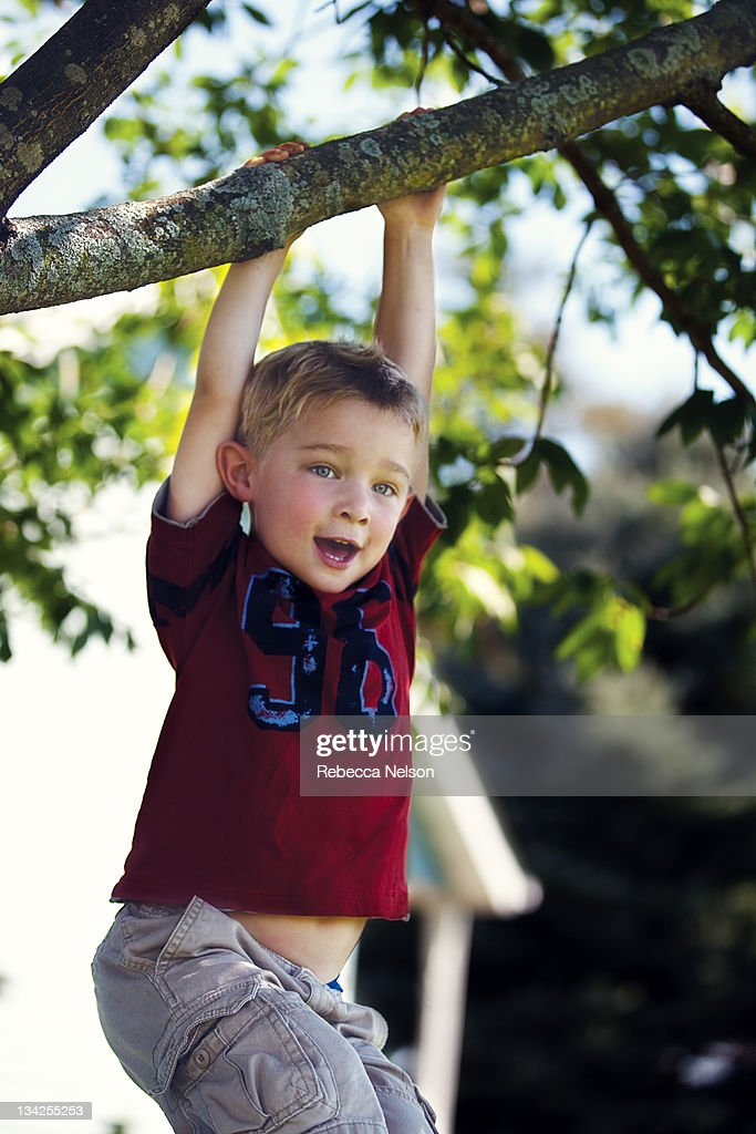 Little boy hanging from tree branch : Stock Photo
