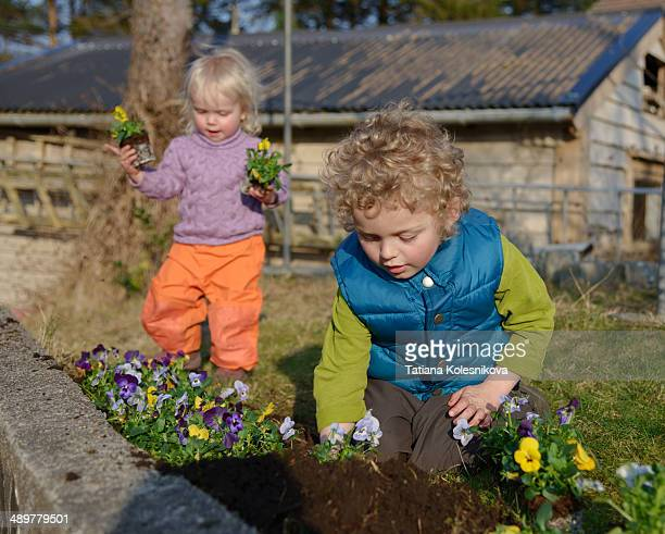 Little boy helping to plant flowers in the garden