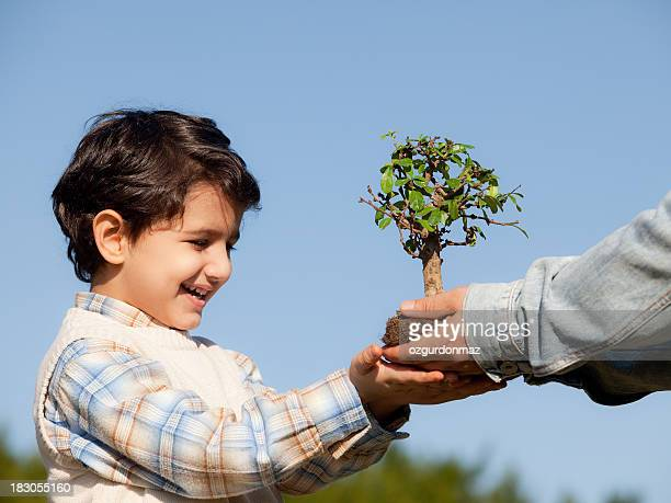 Little boy holding bonsai tree