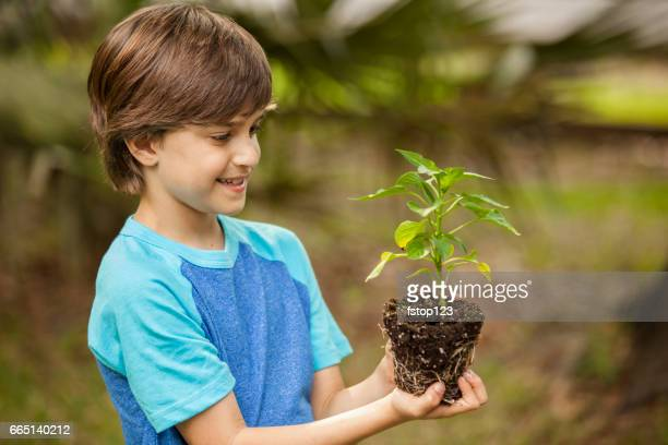 Little boy holds seedling plant in dirt with roots outdoors.
