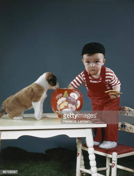 A little boy is discovered with his hand in the biscuit jar a St Bernard puppy is his accomplice 1949