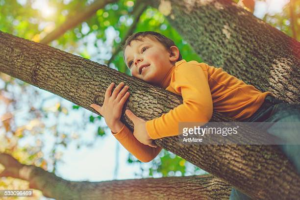 Little boy on a tree