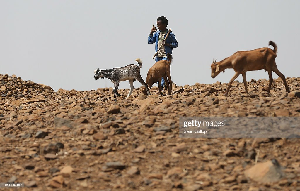 A little boy oversees goats in the Lasta mountain range on March 19, 2013 near Lalibela, Ethiopia. Ethiopia, with an estimated 91 million inhabitants, is the second most populated country in Africa and the per capita income is $1,200.