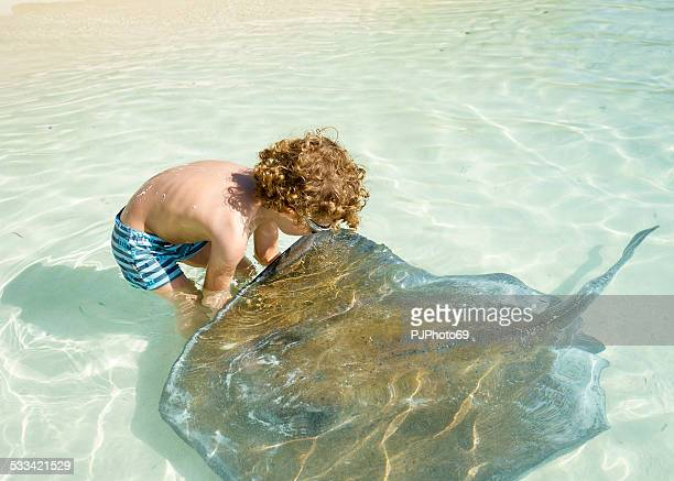 Little boy playing with stingray