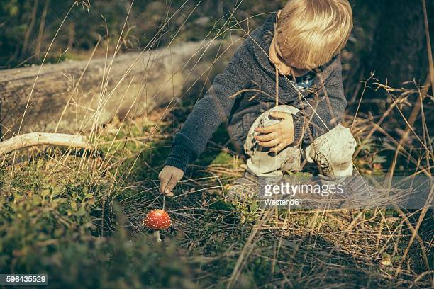 Little boy poking a fly agaric, Amanita muscaria