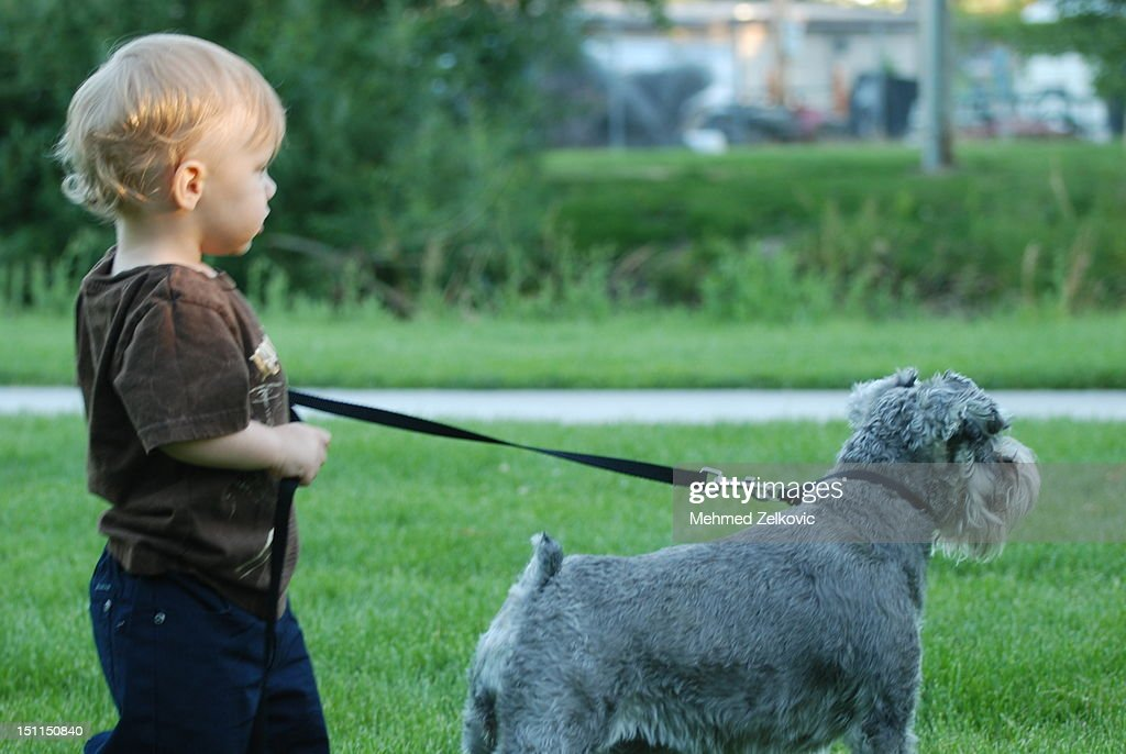 Little boy walking with his dog : Stock Photo