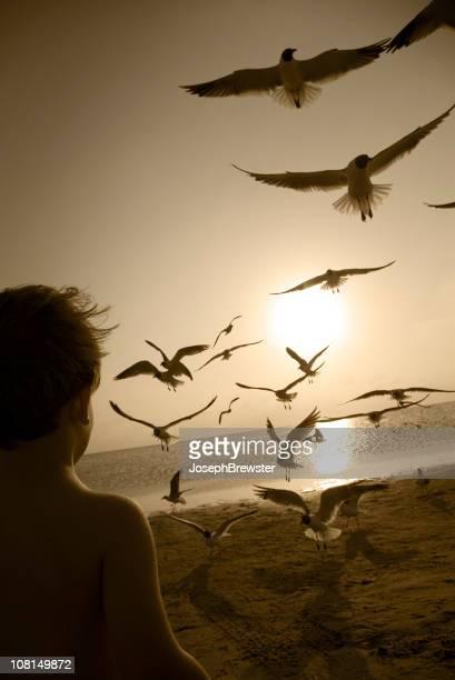 Little Boy Watching Birds Fly Away on Beach Shore