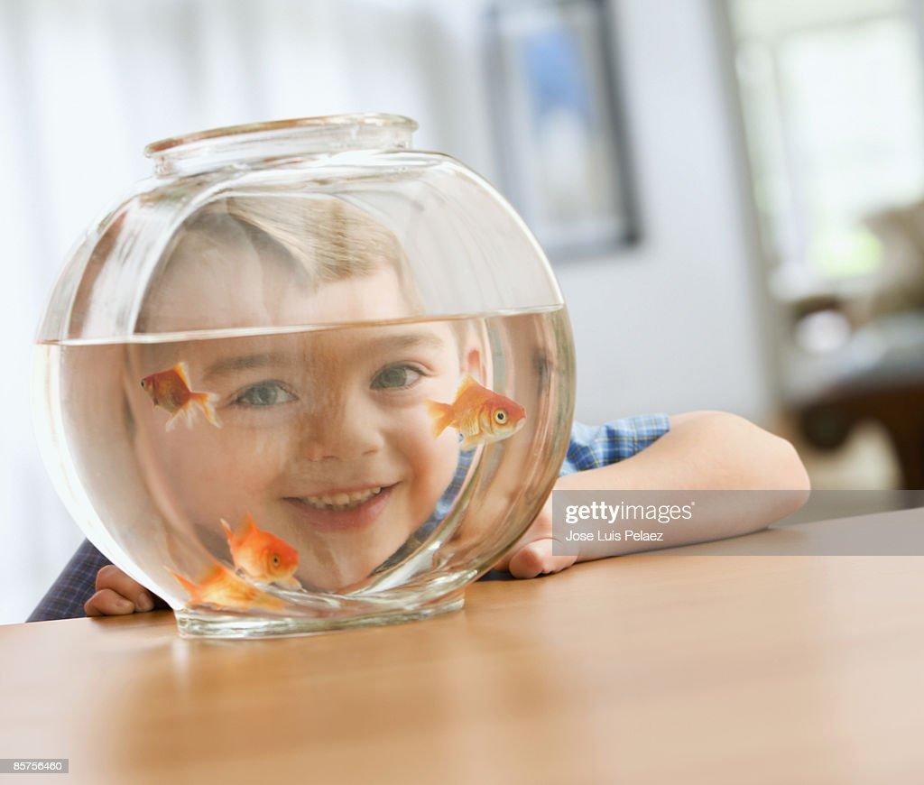 Little boy watching goldfishes : Stock Photo