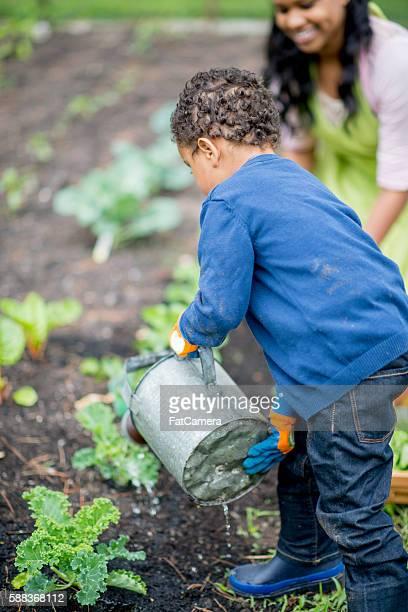 Little Boy Water the Kale Plants