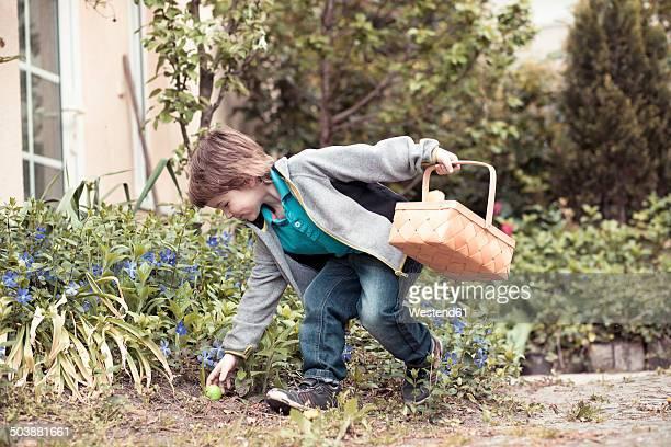 Little boy with basket finding Easter egg