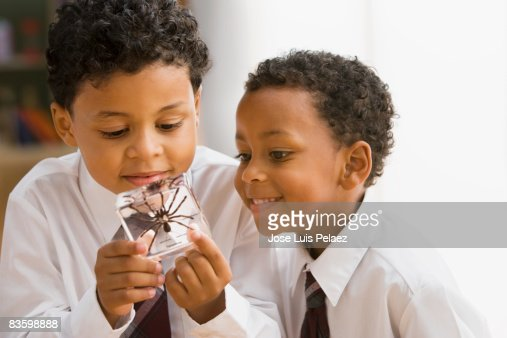 2 little boys studying spider sample : Stock Photo