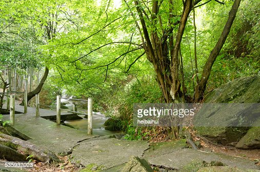 Little bridge and murmuring brooks in forest : Stock Photo