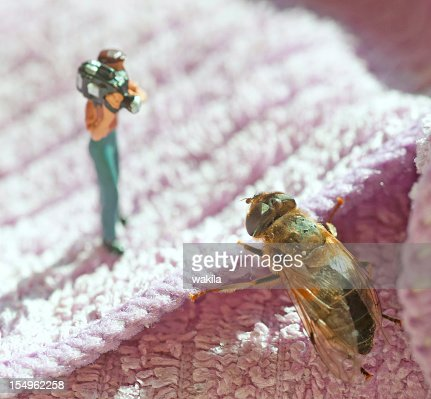little camera man with insect : Stock Photo