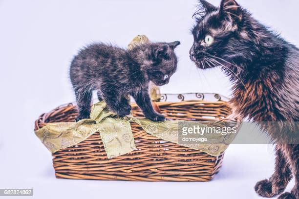 Little cat and mom playing together