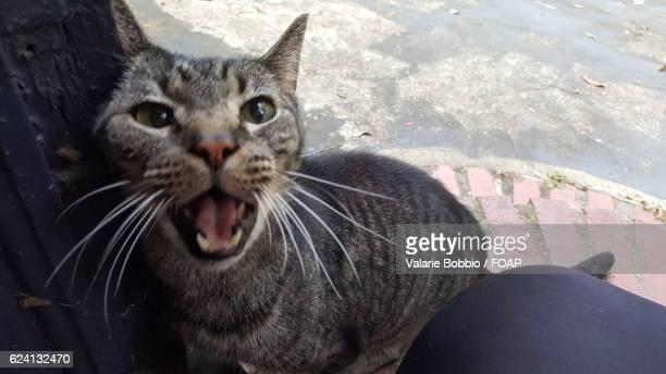 A little cat miaowing