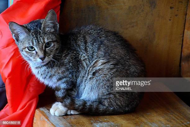 Little cat Philippines