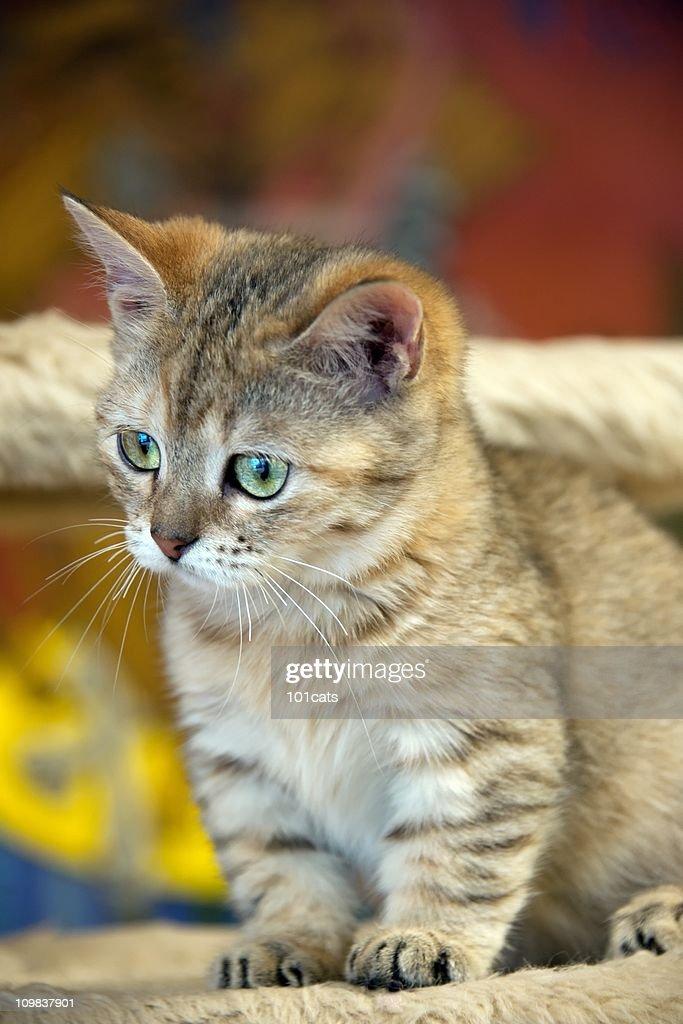little cat : Stock Photo