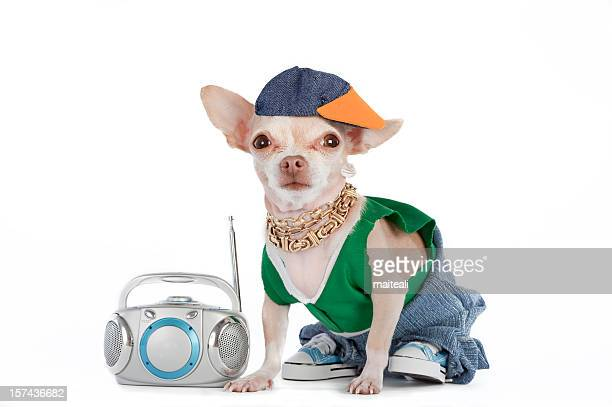 A little Chihuahua dog dressed like a rapper with a boombox
