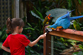 Little child (girl age 5-6) feed a Blue and Gold Macaw a native bird to central America and South America