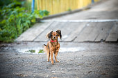 little cute dog on walk