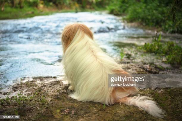 Little dog on the rock at water flowing in forest