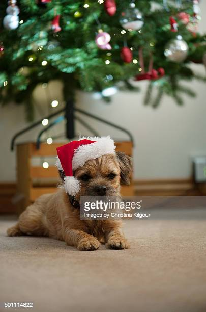 Little dog sitting under the tree