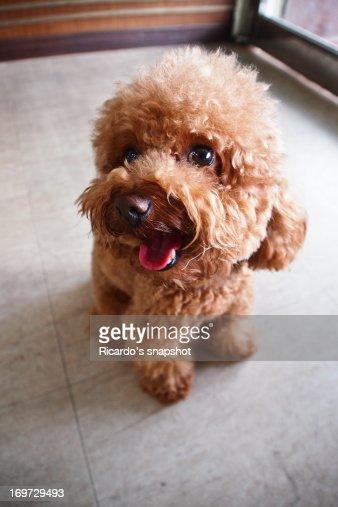 Little doggy : Stock Photo