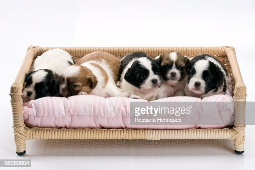 Little dogs : Stock Photo