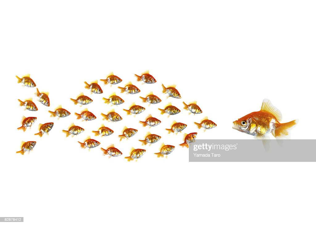 Little fish form a big fish meeting a fish. : Stock Photo