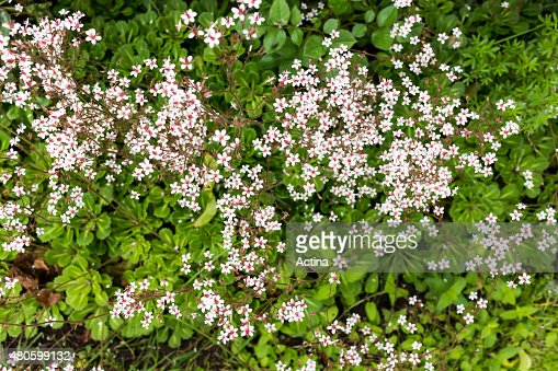 Little flowers in flowerbed green and white : Stock Photo