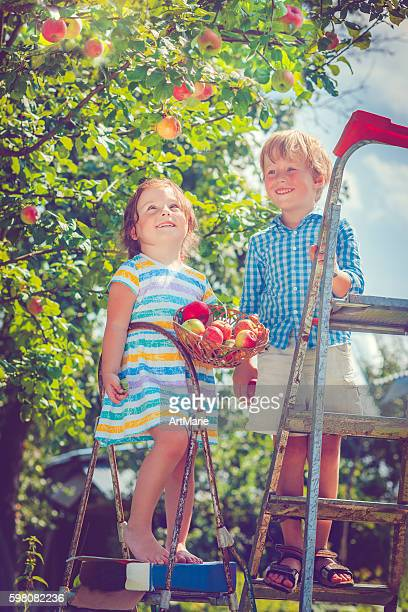 Little girl and boy picking apples from a tree