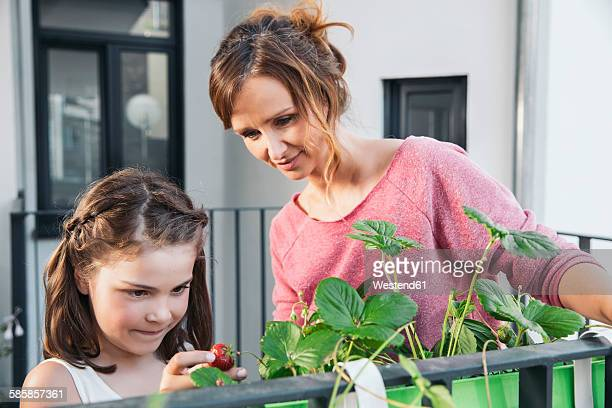 Little girl and her mother watching strawberries on balcony