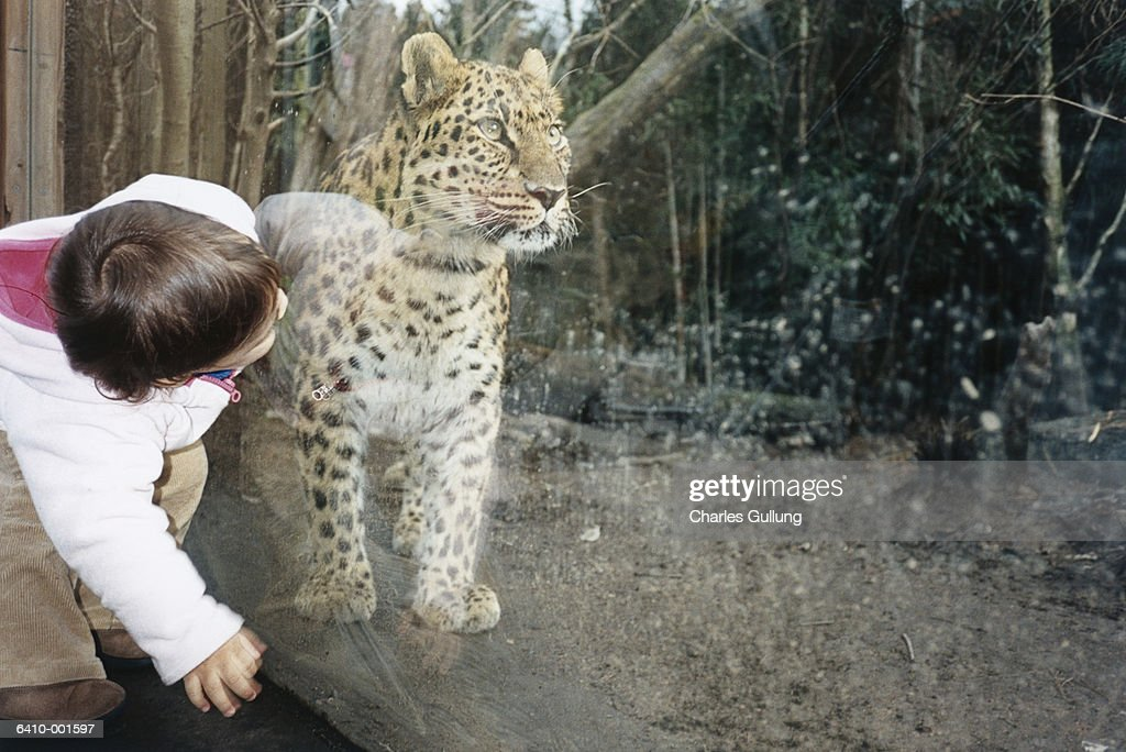 Little Girl by Stuffed Wildcat : Stock Photo