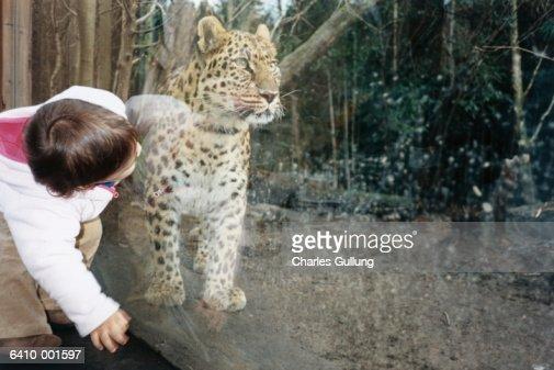 Little Girl by Stuffed Wildcat : Stock Photo