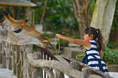 Little girl feeding a giraffe at the zoo at the day time